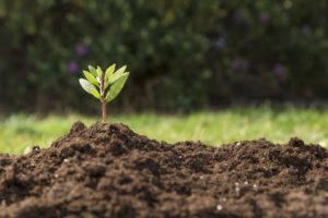 Napredna gnojila za optimalno rast rastlin