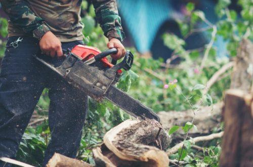 Motorne žage za podiranje dreves